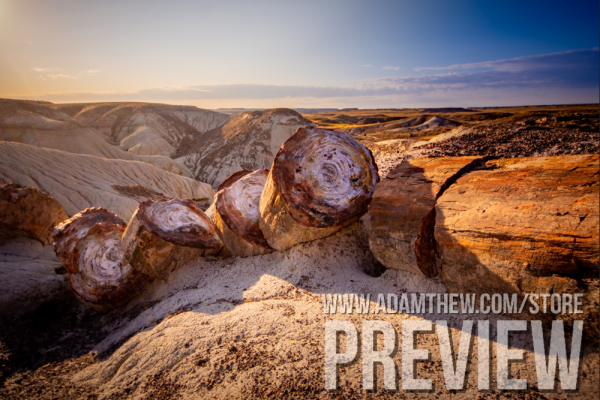 Sun Setting Over Petrified Forest