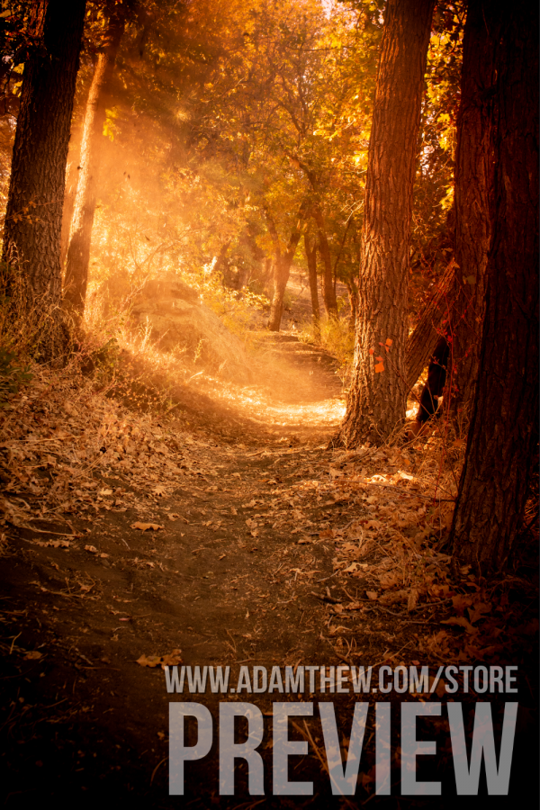 Rays Of Light And Leaves Across Forest Path In Autumn