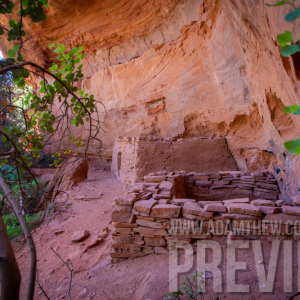 Cliff Dwellings Hidden Behind The Trees Hug The Canyon Walls