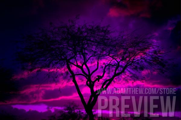 Tree Silhouette Against Vibrant Purple Sky
